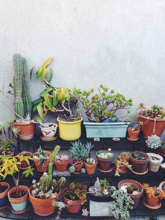 Petit jardin de cactus