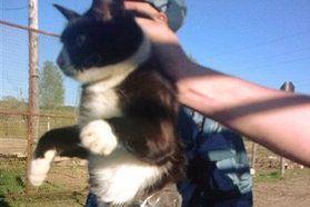Un chat arrêté pour contrebande de portables en Russie Le 4 juin 2013 par Alexandre S. Tentant d'introduire illégalement deux téléphones portables avec chargeurs dans l'enceinte d'une prison russe, un chat a été arrêté par les autorités.