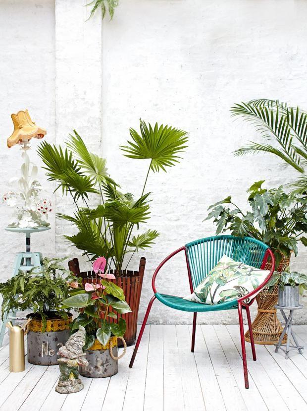 39 besten dschungel bilder auf pinterest dschungel zimmerpflanzen und buecher. Black Bedroom Furniture Sets. Home Design Ideas