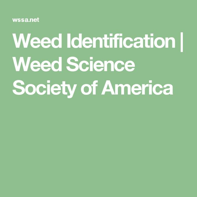 Weed Identification | Weed Science Society of America