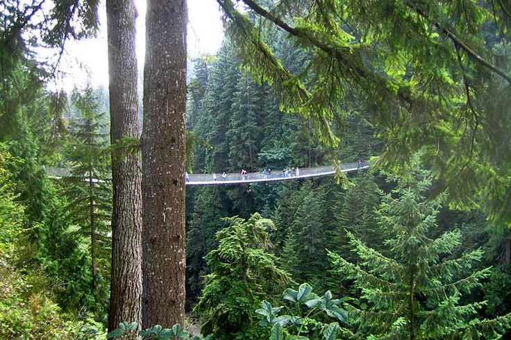 Walking across the Capilano Suspension Bridge, British Columbia | How to make the most of an activity based trip to British Columbia | Weather2Travel.com #bc #canada #travel #adventure #hiking