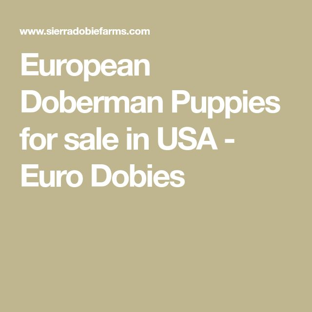 European Doberman Puppies for sale in USA - Euro Dobies