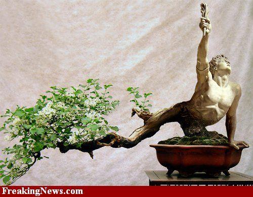 bonsai art/ That is the tree trunk shaped like a man