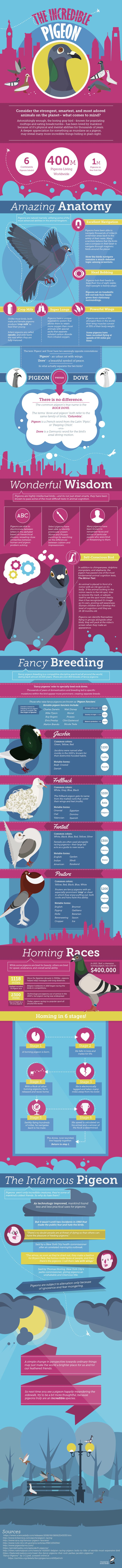 Interesting Facts about Pigeons Infographic