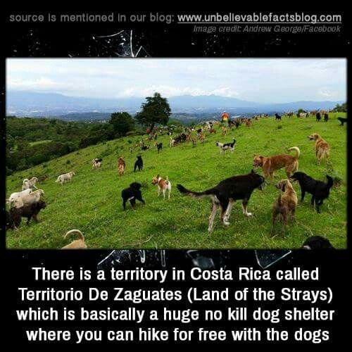 Land of the Strays - Costa Rica