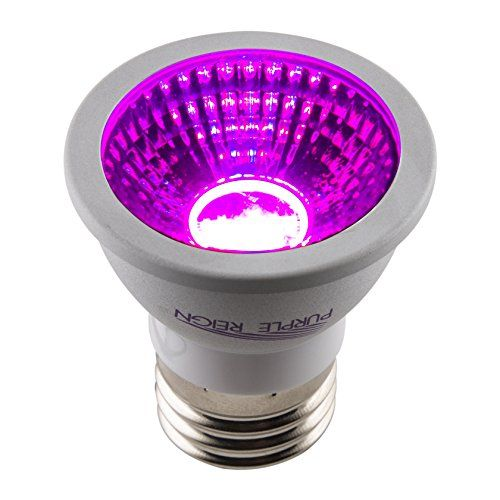 special offers apollo purple reign 6w mr16 led grow light bulb for plant growing review in stock u0026 free shipping you can save more money