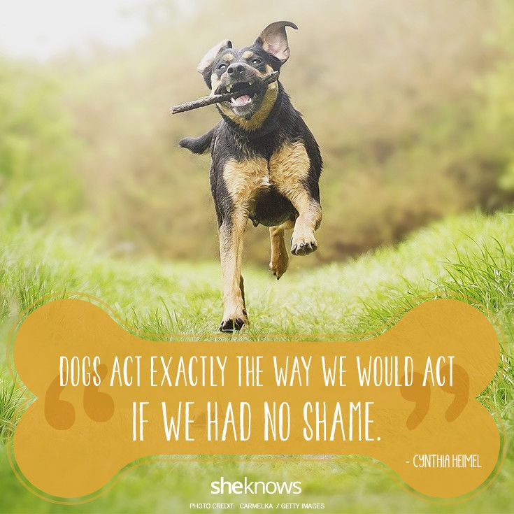 70 Dog quotes that will melt your heart: Dog quotes