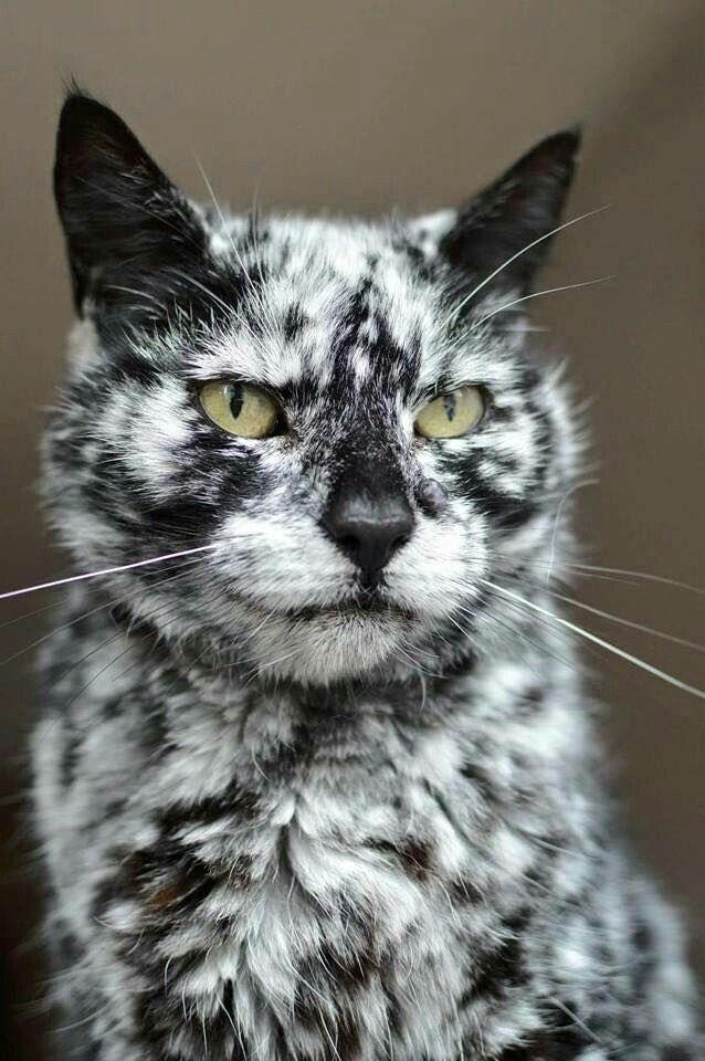 OMG -- look at this wonderful cat!