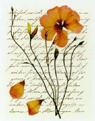 I like the quaintness of pressed flowers against an old letter or music sheet.