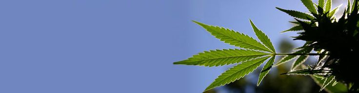 Medical Marijuana Delivery - California Medical Cannabis Delivery