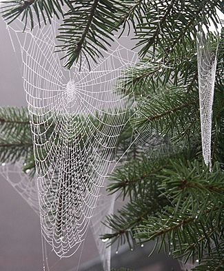 Spider Art! Aren't they beautiful?! Photo of moist spider webs - Heavy rains in southeastern Australia have caused a huge increase in the number of spiders being born.