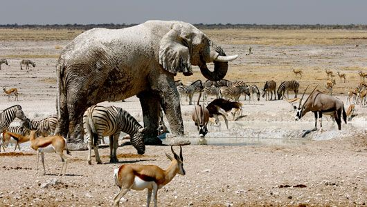 See the salt pans in Etosha National Park with Ker & Downey Africa #luxurytravel #namibia