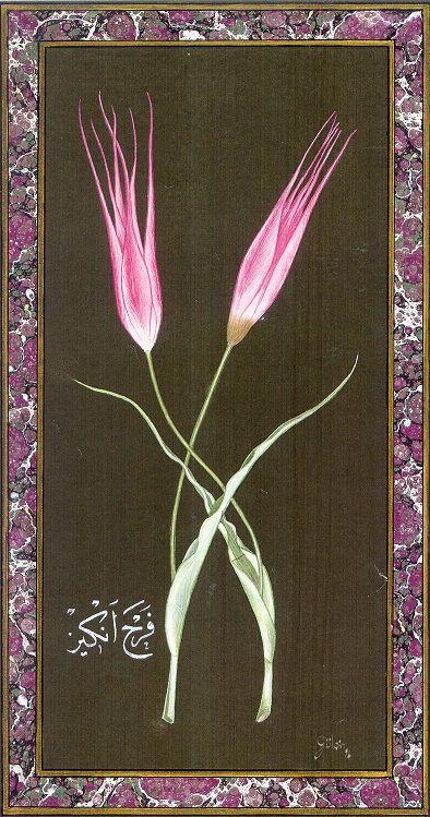 """Tulip of Istanbul"" by Gulcin Anmac."