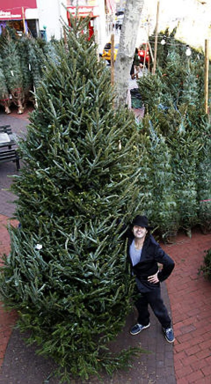 New York City's Premiere Christmas Tree Shop. Soho Trees offers Christmas Tree Delivery in NYC. We also offer Christmas Wreaths, Garland, Decorations, Lights, Ornanaments. 212-920-9094. 76 Varick Street, STE 2, New York, NY 10013. https://www.sohotrees.com/ #christmastrees #xmastrees #christmastreeshop #christmastreestore #christmaswreaths #christmastreedelivery