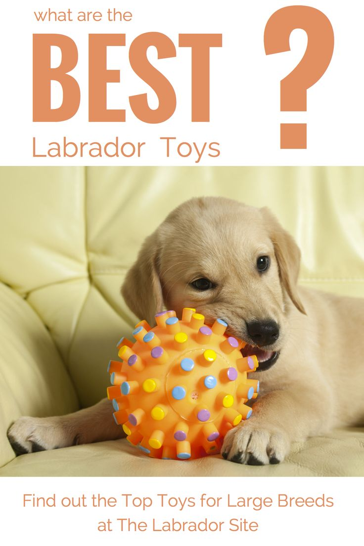 Looking at the best dog toys for large breeds like Labradors. Sharing our knowledge about indestructible dog toys, dog puzzle toys, dog chew toys, soft toys for dogs and many more.