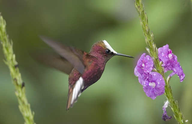 Hummingbirds at Rancho Naturalista.  Relax on the balcony.