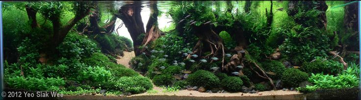2012 AGA Aquascaping Contest - Entry #245