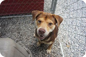 Henderson, NC - Rottweiler Mix. Meet Bruce, a puppy for adoption. http://www.adoptapet.com/pet/13739452-henderson-north-carolina-rottweiler-mix