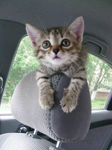 Seriously… Stop! I'll walk!