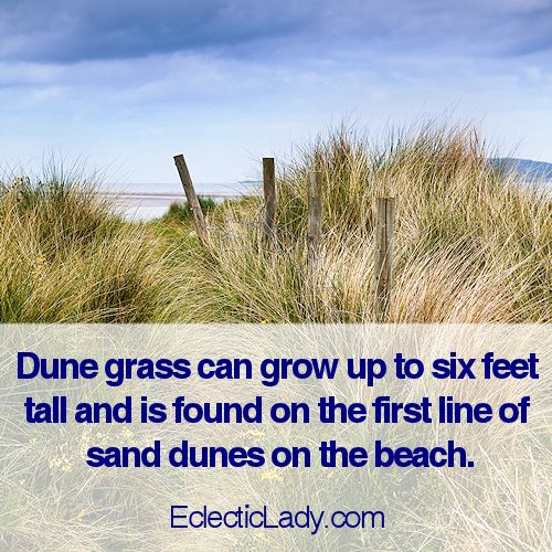 Dune Grass is a crisp blend of bamboo leaf and lemon verbena intertwined with bergamot and lush orchid. Compare to Yankee Candle. This fragrance is phthalate-free. http://eclecticlady.com/data/fragrances.php?f=fragrances-atoz.txt&s=dunegrass