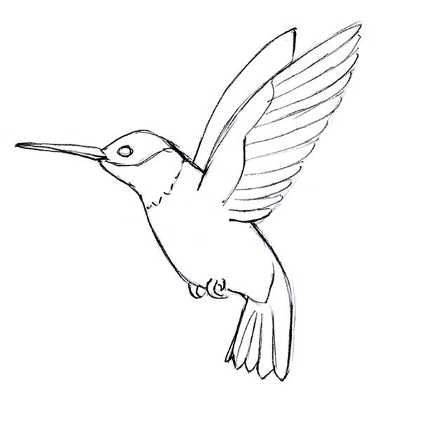 Simple Hummingbird Line Drawing Qqttfuq