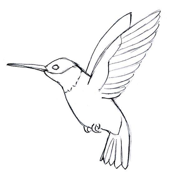 Simple Hummingbird Line Drawing Qqttfuq
