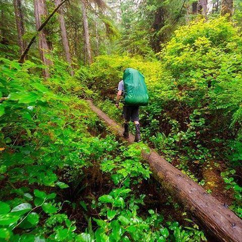 @sndon: Everyday stroll through the rainforest🚶🏻#explorebc  @hillsoundequipment #hillsound 📷: @sndon