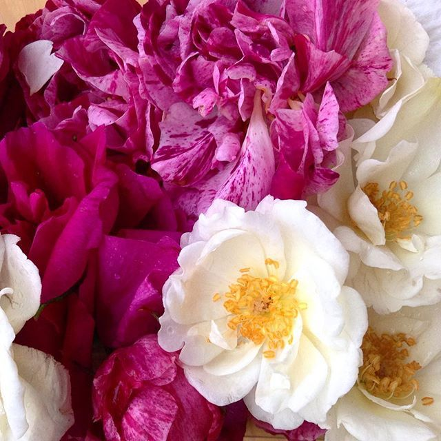 Thank you for the roses, for the roses... #edibleflowers #smellsgoodinhere
