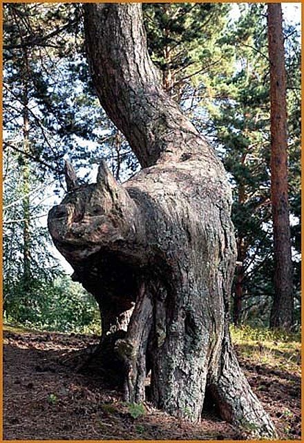 Cat shaped tree - wow now all that is needed is a cute little enchanted cottage to live in with my cats!!