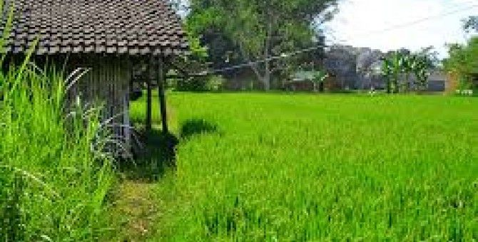 my house on the edge of rice fields