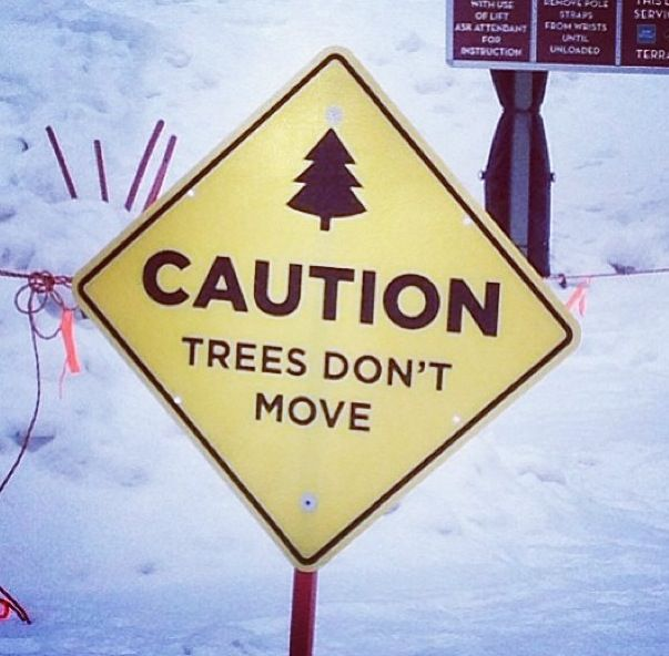 trees don't move! | #skatedeluxe #sk8dlx
