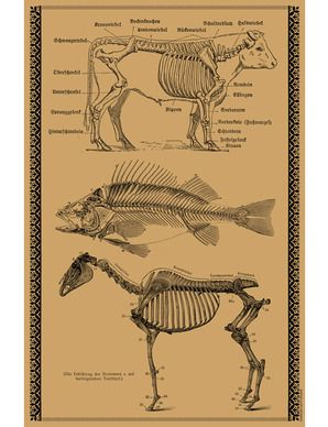 This unusual gift wrap sheet by Charles Lahti features anatomical illustrations of a cow, fish and horse. Hand-screened with black ink on kraft paper, it serves well as a poster or gift wrap.