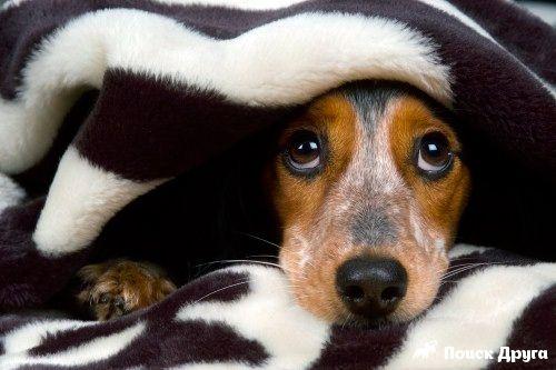 почему собаки боятся грозы - Поиск в Google
