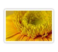 Sticker #gerbera #yellowgerbera #yellowgerberaflower #gerberamacro #macro #sandrafoster #sandrafosterredbubble  #redbubble