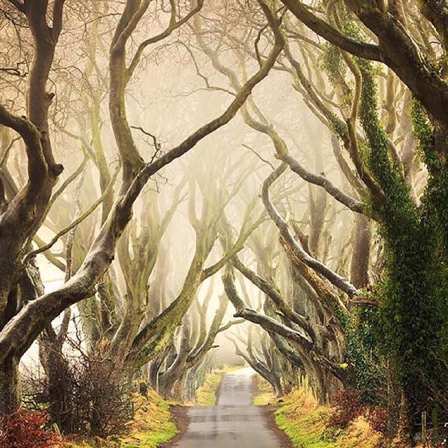 Follow @globefever for more. Enchanted forest ~ The Dark Hedges, Northern Ireland. Photo by @klarens_
