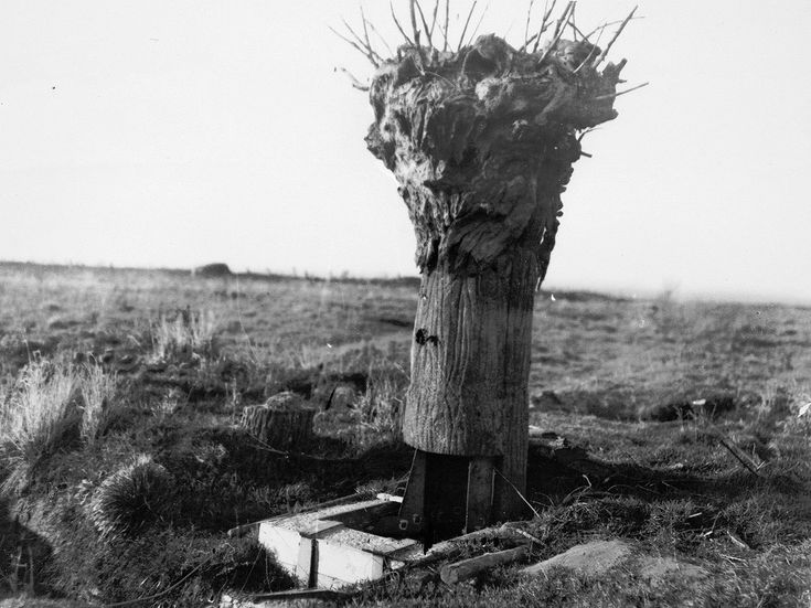 poste d'observation britannique dans un faux arbre