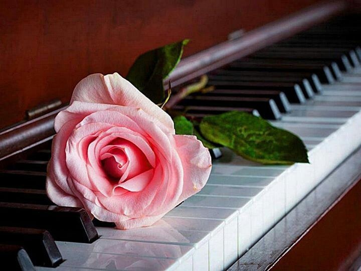 Piano and pink rose http://pinterest.com/cameronpiano