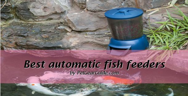A guide to the best automatic pond fish feeder and automatic koi feeder. Read on to find detail review of our top picks - Fish Mate P70000 Pond Fish Feeder & Sweeney Feeders Koi Cafe Automatic Feeder