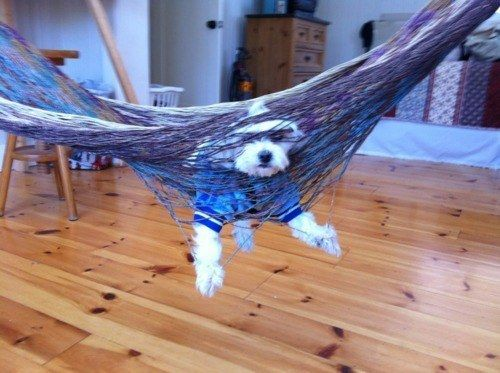 PetsLady's Pick: Funny Tied Up Dog Of The Day  ... see more at PetsLady.com ... The FUN site for Animal Lovers