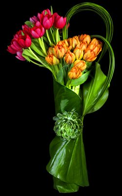 Lovely tulip bouquets #Spring #Beauty #Flowers ★ www.facebook.com/EssencetoSuccess. From Mombhm