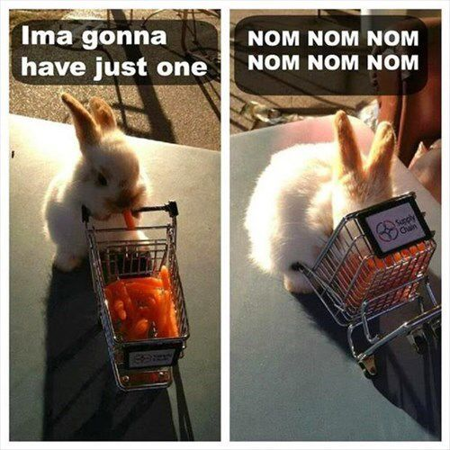 Baby Carrots Are Too Tempting for a Baby Bunny http://chzb.gr/1hoeykg