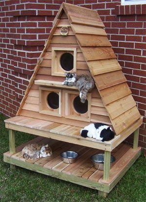 gatti icucciaxgatti