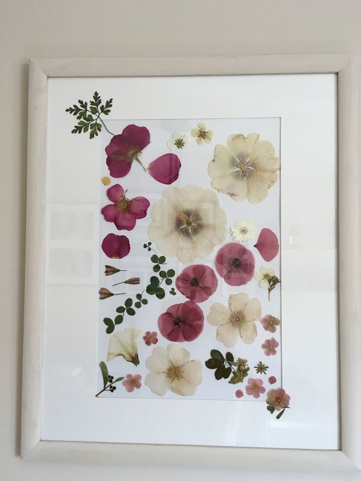 Dried flowers in frame.