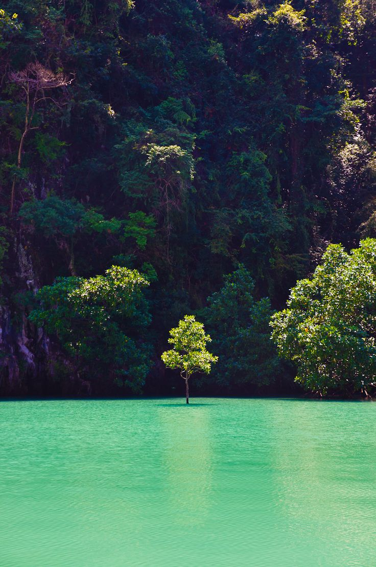 Lonely tree.: Spaces, Favorite Places, Nature, Green, Beautiful Places, Places I D, Trees, Things, Photography