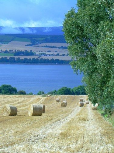 From the Black Isle