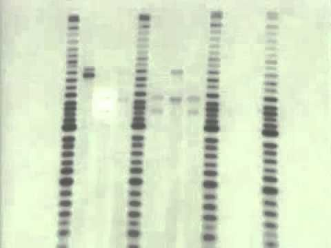 Forensic science: DNA Evidence - YouTube