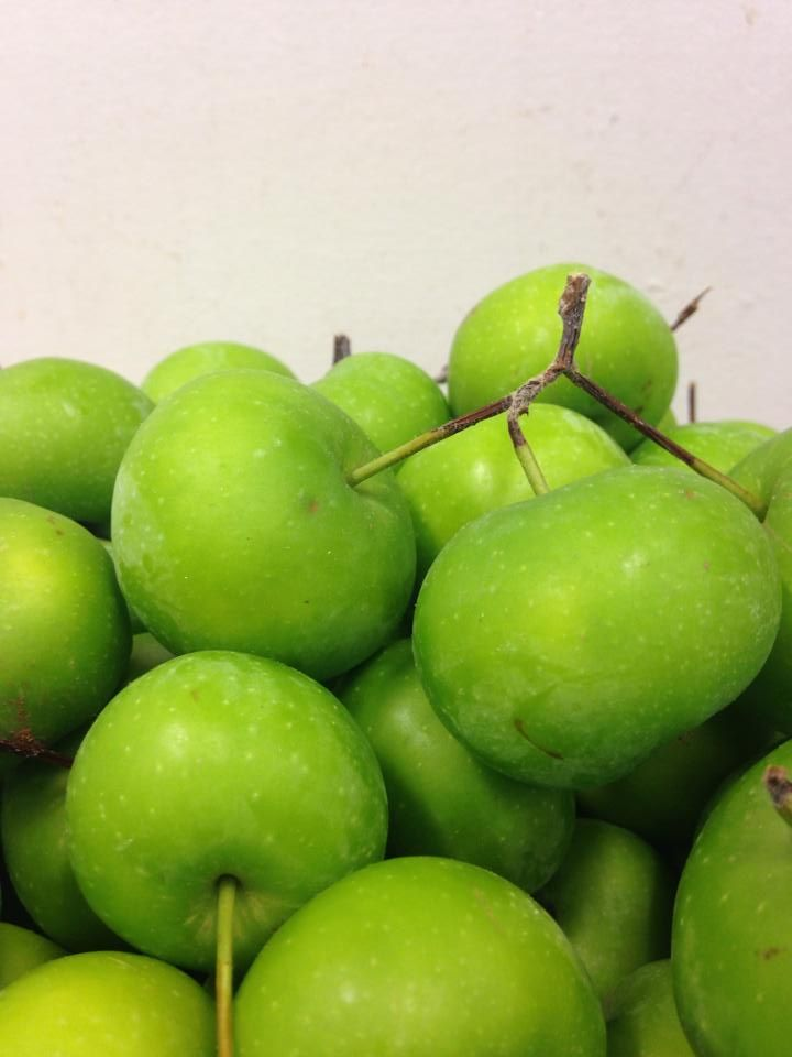 Malus - eple