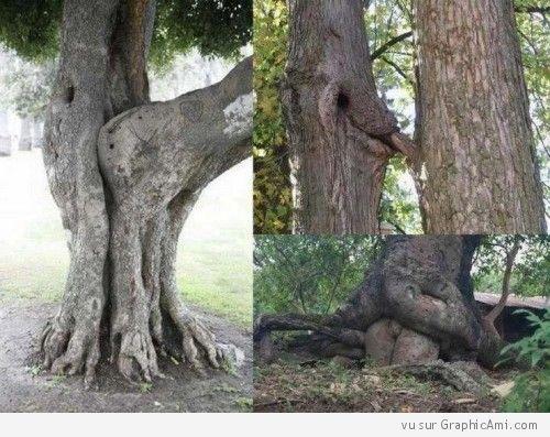 La nature est bien faite ! Les arbres aussi ont leurs moments d'intimité :-)