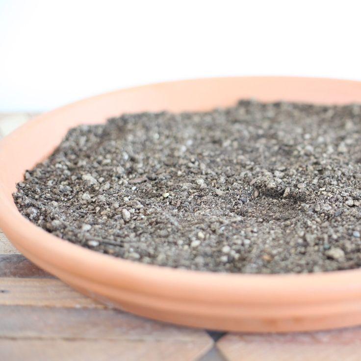 Succulent Soil Propagation