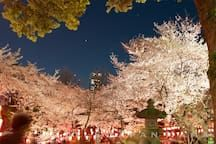 Ueno Park  Overall time approx 30mins from House